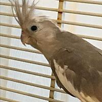 Adopt A Pet :: Cream, Veronica, Kai & Makenzi - Punta Gorda, FL