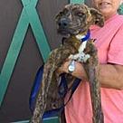 Adopt A Pet :: Clarence