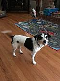 Carlie thumbnail image