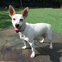 Adopt A Pet :: Wyman - Dallas, TX