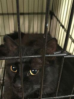 Adopt A Pet :: Myra  - Floral City, FL