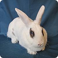 Adopt A Pet :: Sheena - Los Angeles, CA