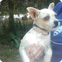Adopt A Pet :: Tooter - Lebanon, CT