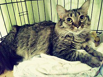 Adopt A Pet :: Gorgeous Robin  - Ft Myers Beach, FL