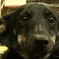 Adopt A Pet :: Jock - Newnan, GA