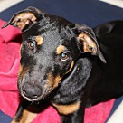 Adopt A Pet :: 27519 - Leo