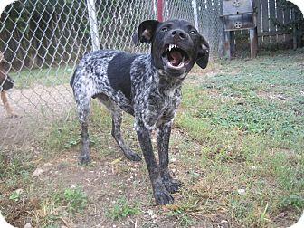Dog Rescue San Antonio Tx