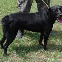 Adopt A Pet :: Mallory - Dublin, GA
