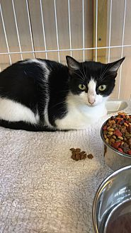 Adopt A Pet :: Sassy  - Floral City, FL