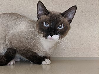Adopt A Pet :: Bobbie  - Laramie, WY