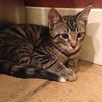 Adopt A Pet :: Tippy Canoe - Hudson, NY