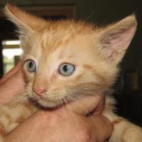 Adopt A Pet :: Donald - West Memphis, AR