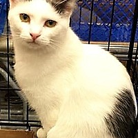 Adopt A Pet :: Tressa - Shelbyville, KY