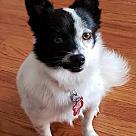 Adopt A Pet :: Little Chloe