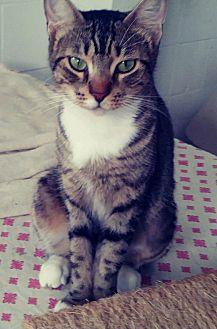 Adopt A Pet :: Keekee's life...  - Ft Myers Beach, FL