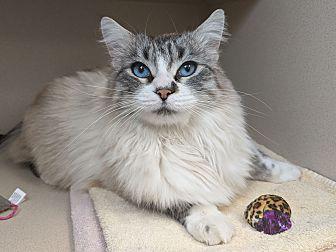 Adopt A Pet :: Henry  - Laramie, WY