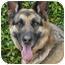 Photo 2 - German Shepherd Dog Dog for adoption in Los Angeles, California - Franz von Scholl