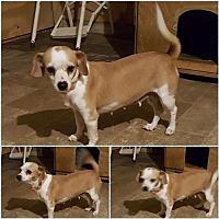 Adopt A Pet :: Momma - Gretna, FL