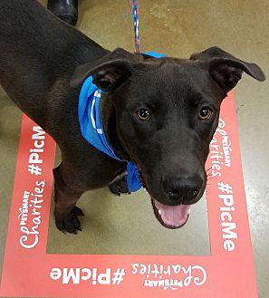 Adopt A Pet :: Rodger Boy  - Snow Hill, NC