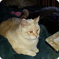Adopt A Pet :: Goodman - Columbia, MD