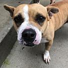 Adopt A Pet :: Janine