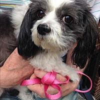 Adopt A Pet :: Polly - Long Beach, NY