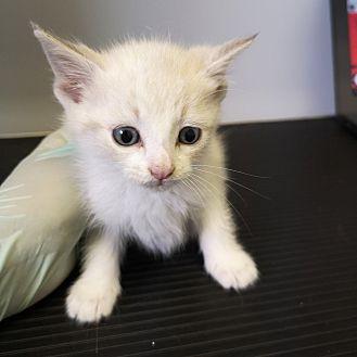 Adopt A Pet :: Ophelia  - Moose Jaw, SK