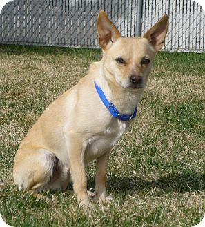 Buffalo, WY - Chihuahua. Meet Big John