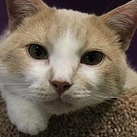Adopt A Pet :: Sebastian - Herndon, VA