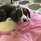 Adopt A Pet :: Power Play