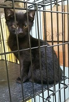 Adopt A Pet :: Toothless  - Mt Vernon, IN