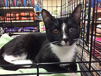 Adopt A Pet :: Harvey and Andrew  - Dallas, TX