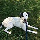 Adopt A Pet :: Jaidyn