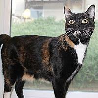Adopt A Pet :: Paris - Palmdale, CA