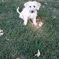 Adopt A Pet :: Maria - Snyder, TX