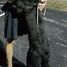 Adopt A Pet :: Cap'n