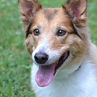 Adopt A Pet :: Molly - Enfield, CT