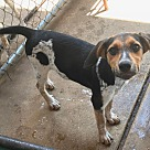 Adopt A Pet :: Kia
