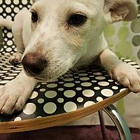Adopt A Pet :: Chunky butt - Tampa, FL