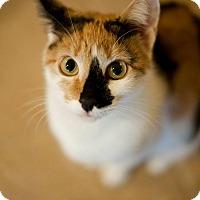 Adopt A Pet :: Jennifurr - Columbia, MD