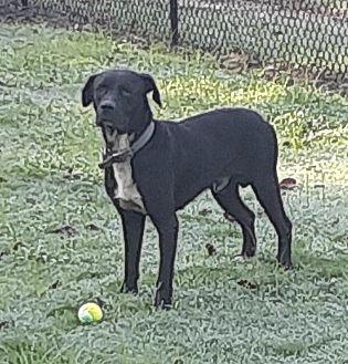 Adopt A Pet :: Drayton  - Edisto Island, SC