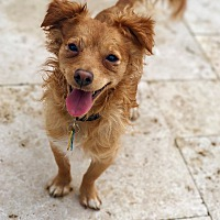 WOOF Animal Rescue in Fremont, California