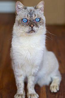 Adopt A Pet :: Bjorn  - Troy, MI
