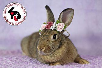 Adopt A Pet :: Peaches  - Wilmington, NC