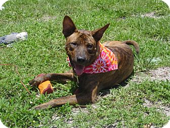 Formosa Dog Adoption