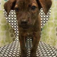 Adopt A Pet :: Jason - Tampa, FL