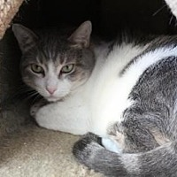 Adopt A Pet :: Snacks - Sebastian, FL