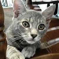 Adopt A Pet :: Brady - Lebanon, PA