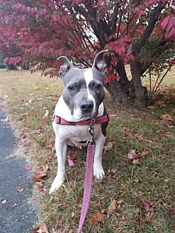 Adopt A Pet :: PRINCESS  - Sterling, MA