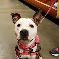 Adopt A Pet :: London - Colonial Heights, VA
